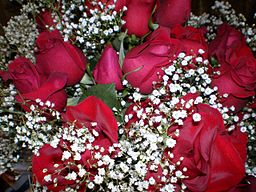RED_ROSES_4_(2791762442)